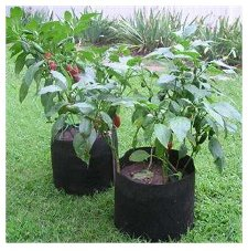 Smart Pots for Container Gardening