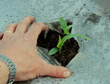 Photo-Degradable Smooth Clear Plastic Mulch 1.0 mil