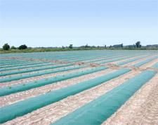 Green Plastic Mulch 1.0 mil Embossed