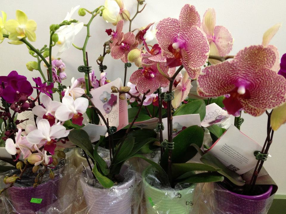 White flower farm and ct orchid society present the fabulous world join other orchid enthusiasts for a free lecture at white flower farm on saturday april 6th at 10am there will be a raffle for free plants too mightylinksfo