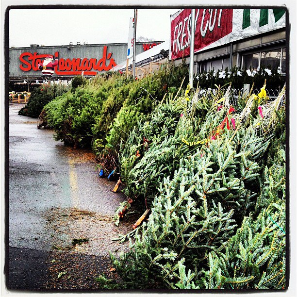 - Photo: Christmas Trees At Stew Leonard's