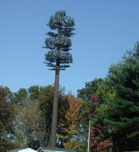 Tree Cell Tower