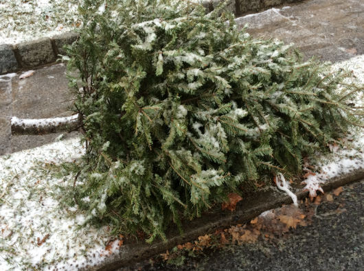 Christmas Tree Pick Up.Christmas Tree Pick Up In Chappaqua On January 7 And January 28