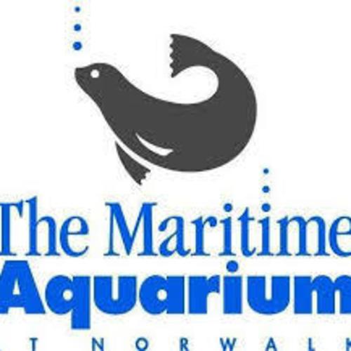 Enjoy maritime with a twist at the maritime aquarium for Maritime motors fairfield connecticut