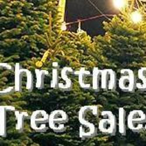 Habitat Christmas Trees: Christmas Tree Sale For Habitat Or Humanity