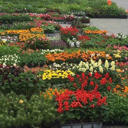Master Gardener Annual May Plant Sale