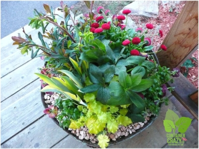 Container Garden with Perennials by Container Crazy Cathy T