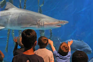 Drop Shop Program Debuts At The Maritime Aquarium