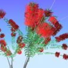 Callistemon Citrinus for Maya 0.2