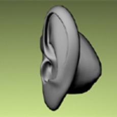 Human Male Ear 3D Model