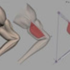 true muscle & bone skin deformation