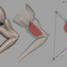 Wrap Skinning for Bone/Muscle Driven Skin Deformation