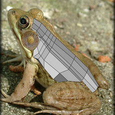 How the image Male Green Frog was made in Maya