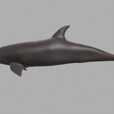 Dolphin high level of detail 3D Model