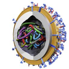 Influenza virus 3D Model