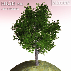 tree 003 chestnut 3D Model