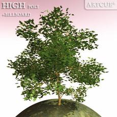 tree 004 marble 3D Model