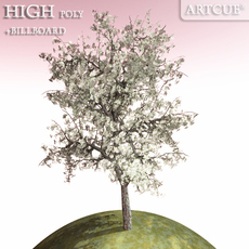 tree 006 blooming pear 3D Model
