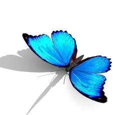 Butterfly 01 3D Model