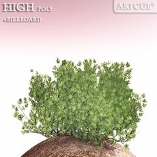 shrub 017 3D Model
