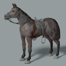 Quarter Horse 3D Model