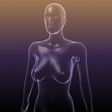 Female Body for Anatomy Renders 3D Model