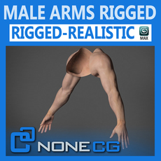 Adult Male Arms and Hands Rigged 3D Model