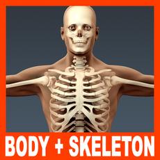 Human Male Body and Skeleton - Anatomy 3D Model