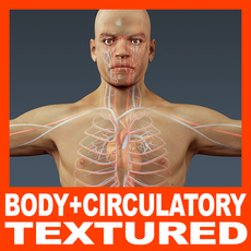 Human Male Body and Circulatory System Textured - Anatomy 3D Model