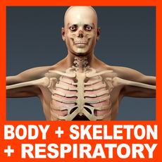 Human Male Body, Respiratory System and Skeleton - Anatomy 3D Model