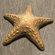 Starfish 3D Model
