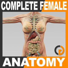 Human Female Anatomy - Body, Muscles, Skeleton, Internal Organs and Lymphatic 3D Model