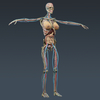 02 31 00 160 femanatomy th004 4