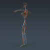 02 31 02 73 femanatomy th016 4