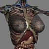 02 31 12 442 femanatomy th062 4