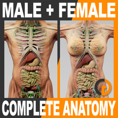 Human Male and Female Complete Anatomy - Body, Muscles, Skeleton, Internal Organs and Lymphatic 3D Model