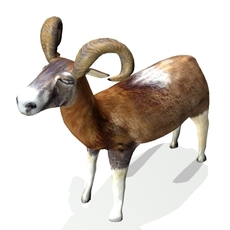 Ram 3D Model