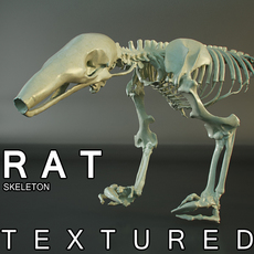 Skeleton of Rat in HD quality (Render scene included) 3D Model