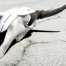 cattle skull 3D Model