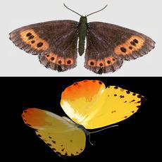 butterfly set 3D Model