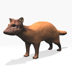 Marten 3D Model