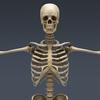 03 03 28 528 skeletonmayarigged th004 4