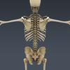 03 03 28 658 skeletonmayarigged th006 4
