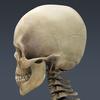 03 03 29 747 skeletonmayarigged th016 4