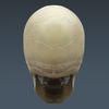 03 03 30 735 skeletonmayarigged th018 4