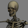 03 03 31 5 skeletonmayarigged th021 4