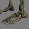 03 03 32 609 skeletonmayarigged th025 4
