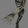 03 03 32 732 skeletonmayarigged th026 4