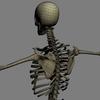 03 03 32 786 skeletonmayarigged th027 4
