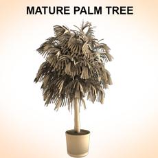 Mature Palm 3D Model